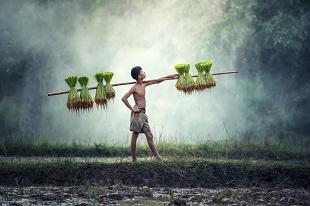 agriculture au Cambodge -Circuit essentiel du Cambodge