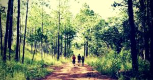 Parc national cambodge - réserves cambodgiennes